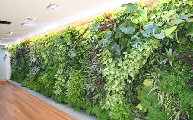 Vertical Wall garden Integrating Nature into the home